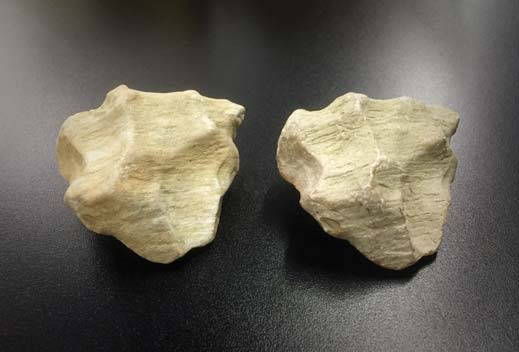 fossil believed to be a bone or tooth and the replica