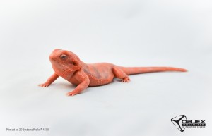 Red Bearded Dragon - Objex Unlimited