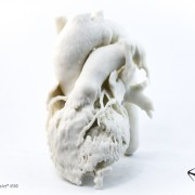 CT Scan of Human Heart (Monochrome) - Objex Unlimited. Printed on a ProJet 4500.